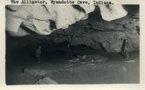 Image of The Alligator - Caves--Wyandotte Cave