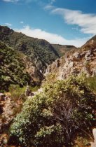 Image of Opihi Gorge collection site