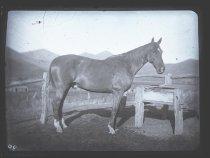 Image of ['Smuggler'] - Clayton Station Collection
