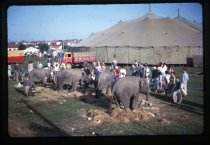Image of [Bullens Circus elephants at Timaru] -