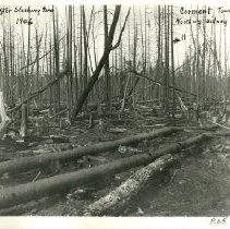 Image of Cormant Township Woods After a Slashing Fire - Logging after slashing fire, north of Sidney Sand's, Cormant township, 1906