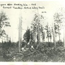 Image of Two Years After Slashing Fire - Two years after slashing fire, north of Sidney Sand's, Cormant township, 1908 5 women sitting in the woods