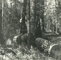 Image of Women in Cormant Township Woods - Cormant Township, 1905. 2 women standing among logs in the woods
