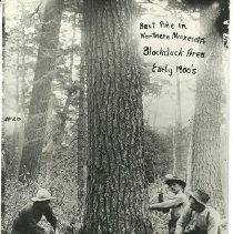 "Image of Logging the Best Pine in Northern Minnesota - Logging pine, Blackduck area, early 1900s ""Best Pine in Northern Minnesota""