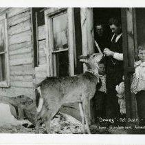 "Image of Pet Deer ""Dewey"" at the George Gunderson Home - Pet deer ""Dewey"" at the George Gunderson home, 1905.  2 adults and 3 children in doorway with Dewey"
