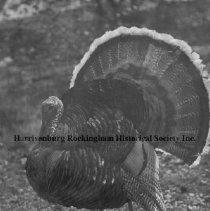 Image of Photo0079.jpg - Turkey