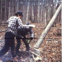 Image of Photo3050.02.jpg - Two men cutting tree.