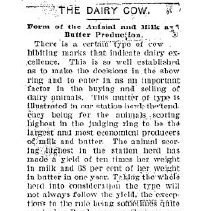Image of The dairy cow