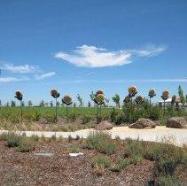Image of Sunflowers - Bassoff-Faducci, Solomon