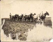 Image of 8 Mule Team Plow