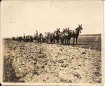 Image of Several 8 Mule Teams