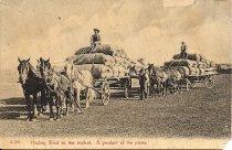 Image of Wool Wagons
