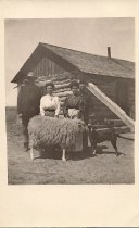 Image of Sheep Post Card