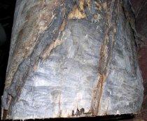 Image of Log (Chewed end)