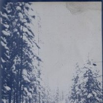Image of Road lined with trees. - 1997.016.0064