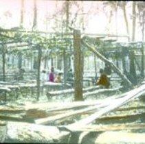 Image of People amongst lumber Florida                                                            - 2000.500.0386