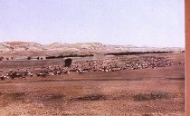 Image of HERD MOVING FROM CASH CREEK ON POWDER RIVER