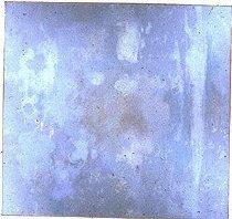 Image of Algae Series