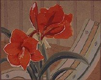 Image of AMARYLLIS #13