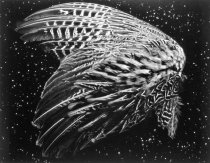 Image of Untitled (wing and stars)