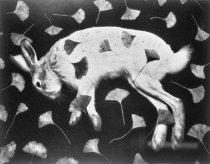 Image of Untitled (rabbit and ginkgo leaves)