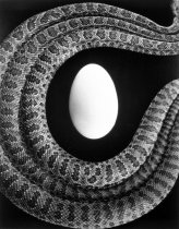 Image of Untitled (egg and snakes)
