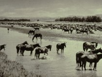 Image of HOT NOON BESIDE THE ROUNDUP, JULY 19, 1904