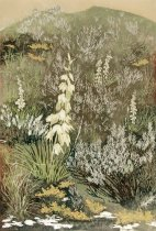 Image of Yucca in Bloom