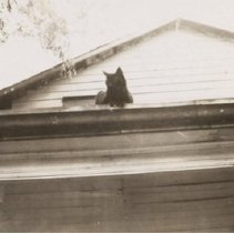 Image of Finkle 130 - Front Porch with Cat - 1929 C