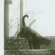 Image of Mark, Mary's Cat (Mose) - 1941