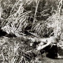 Image of Prince George Battle Drill - Soldiers Crawling Through Swampy Area - 1942