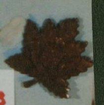 Image of 27th Bn CEF Winnipeg Collar Badge - 1915 C
