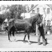 Image of Print, Photographic - A Race Horse Named Marpal