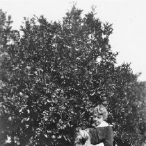 Image of Woman holding dog - Unidentified woman holding a small dog.