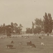 Image of A-34-01-25 - Lancaster City and County Scenes Album