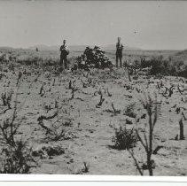 Image of Mountain Meadows Massacre - Photograph, Marker Mt Meadows