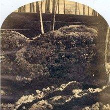 Image of 1977.218.4237 - 948. Mossy Mound on Mount McGregor, Moreau