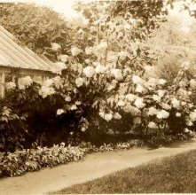 Image of 1978.003.0489 - Garden of the Coolidge Home