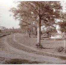Image of 1978.003.0920 - Crandall Park
