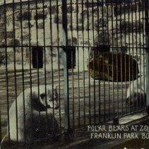 Image of Polar Bears at Zoo                                                                                                                                                                                                                                             - 2007.0060.455