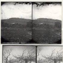 Image of Stereographs of country scenes