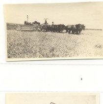 Image of Horse team harvesting; Model T ford  (Holly4) - Horse team harvesting;  Model T ford