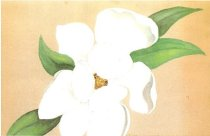 Image of Magnolia paintings found throughout scrapbook