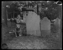Image of Old grave Daniel Malcom, photo by Alice Austen, 1892