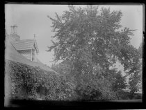 Image of House & Maple tree - Negative, Glass-plate