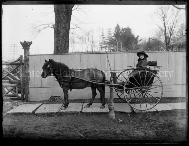 Roger Emmons In Two Wheel Cart Negative Glass Plate
