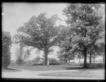 Image of [Tennis grounds, Violet and Caroline Ward] - Negative, Glass-plate