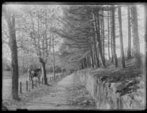 Image of View of south shore road, photo by Alice Austen, 1888