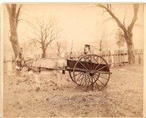 Image of [Harold Applegate in his donkey cart] - Print, Photographic