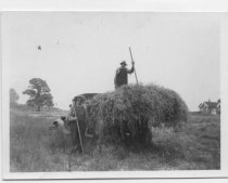 Image of Haying on the Elmer Butler estate, Tottenville, 1942